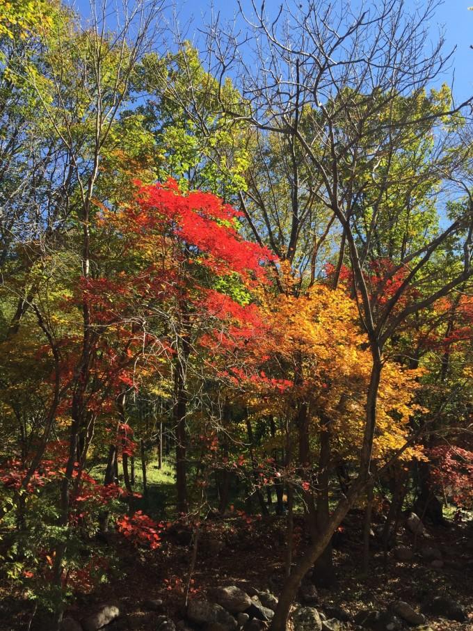 下午到洋湖沟的时候发现拍不出枫叶的色彩,应该是光线过于充足了.