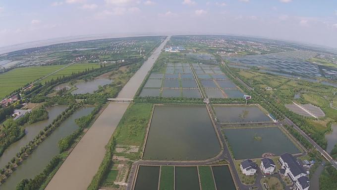 上海市崇明岛天鹅苑