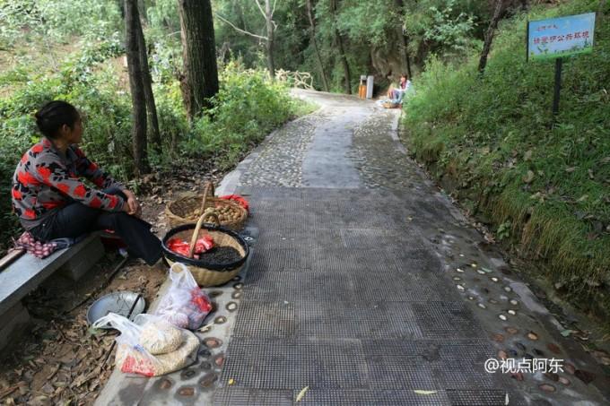游览王顺山国家森林公园 山珍野果令人大饱口福(组图)