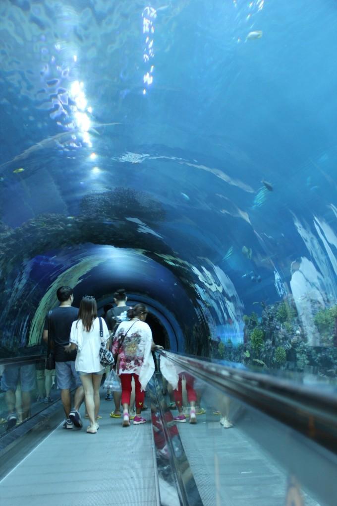 壁纸 海底 海底世界 海洋馆 水族馆 680_1020 竖版 竖屏 手机