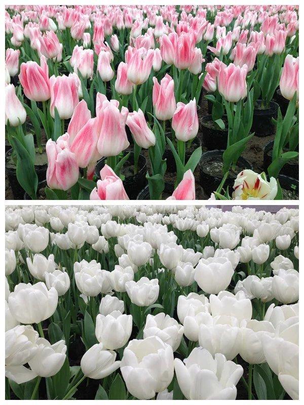 真是春看杜鹃映山红,夏闻荷花幽香来,秋赏芳菊满山野,冬有红叶染层林.