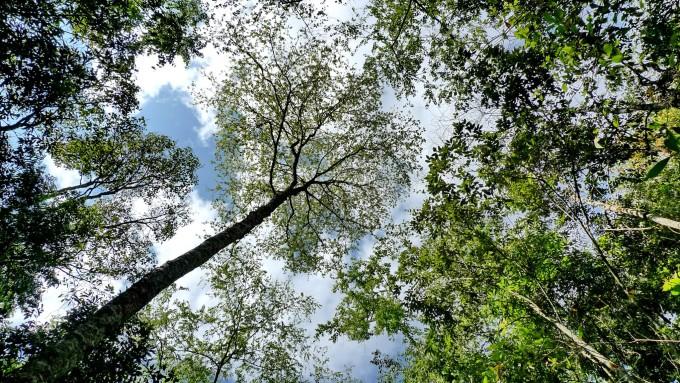 普洱犀牛坪国家森林公园