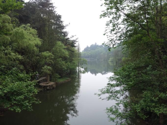 下午的树木风景贴图