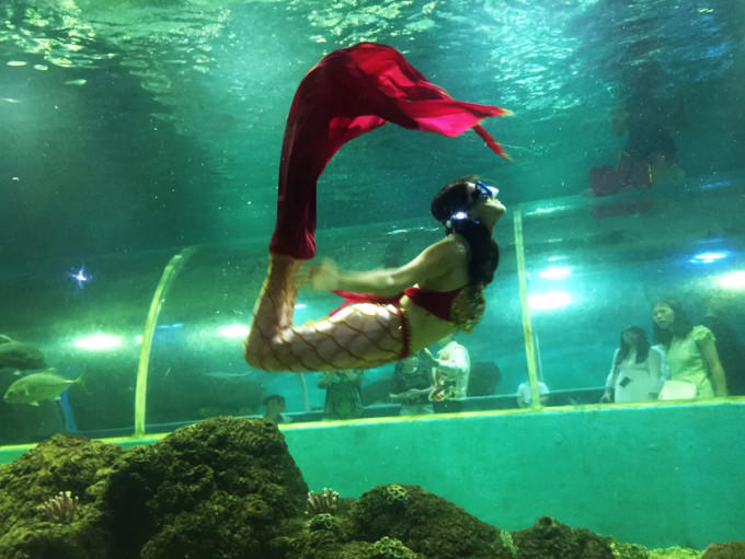 壁纸 海底 海底世界 海洋馆 水族馆 680_511