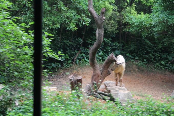 探秘动物王国——广州长隆野生动物园