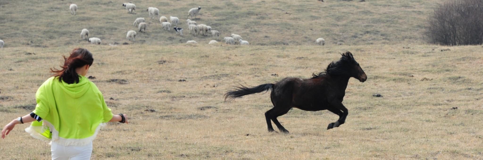东北山林动物图片