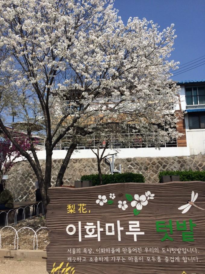 首次出国自由行——韩国首尔济州岛,韩国自助游攻略